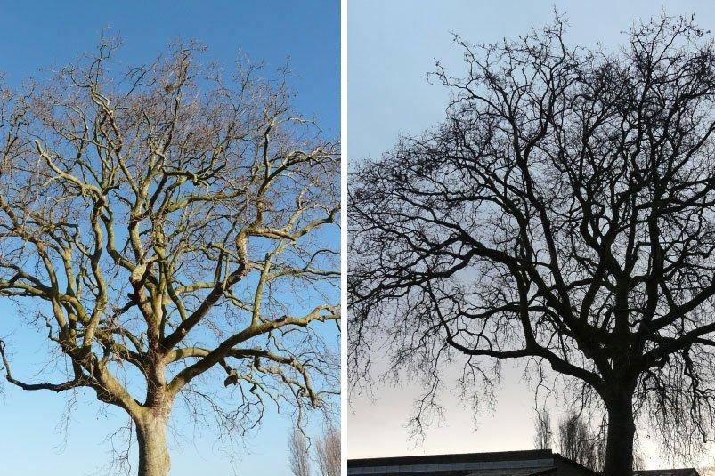Elagage taille d'arbre Entretien arboricole