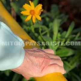 Mitou paysagiste créateur de jardin thérapeutique