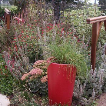 Jardin thérapeutique de Marc Mitou paysagiste créateur